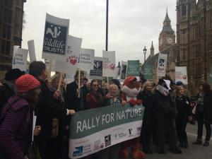 RSPB photo on twitter from the Rally for Nature at Westminster. sourced from https://twitter.com/Natures_Voice/status/542331731727372288/photo/1