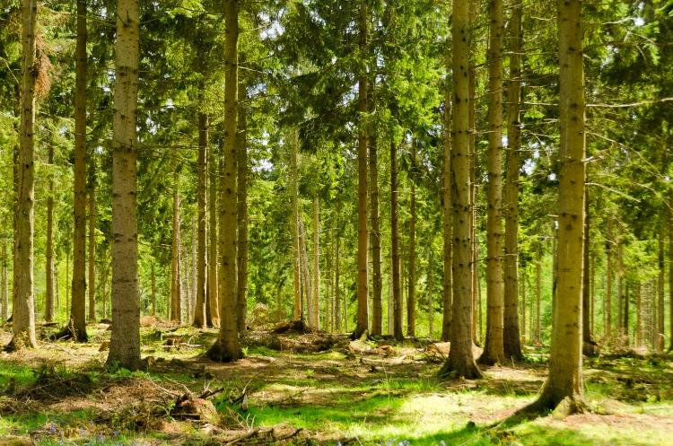 England - English Summer Forest