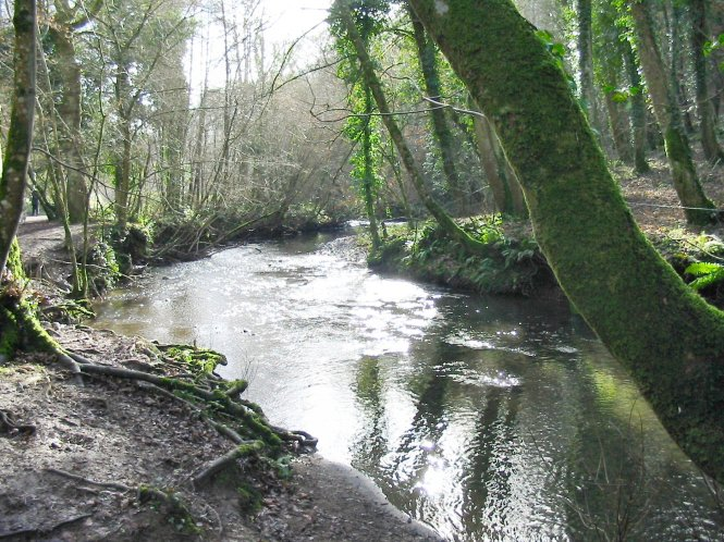 river_lemon_in_bradley_woods_devon_england
