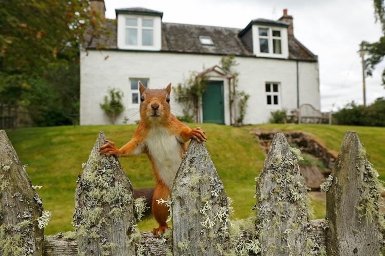 Garden squirrel-01