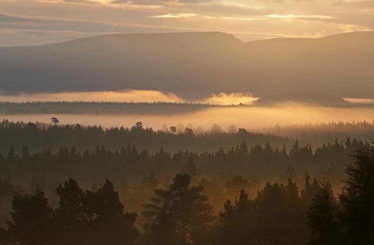 Sunrise rothie forest-2