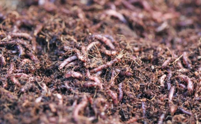 How to compost importance resources and its uses guest for Soil uses and its importance
