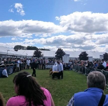 highland show