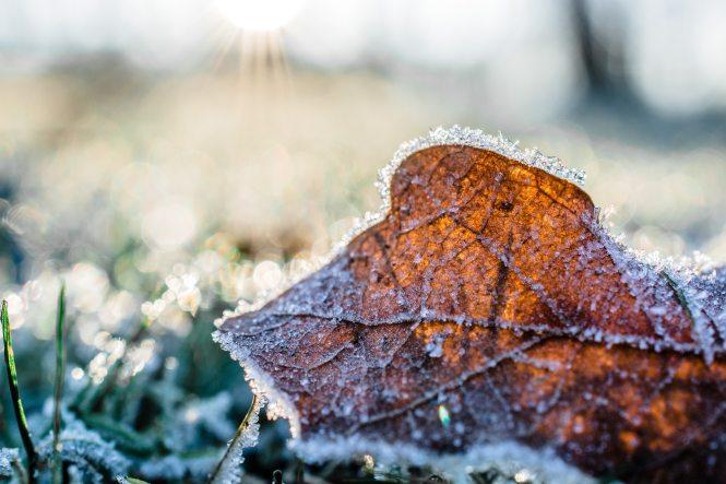 autumn-leaf-close-up-cold-845906.jpg