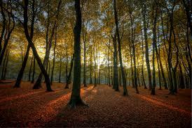 woods sun