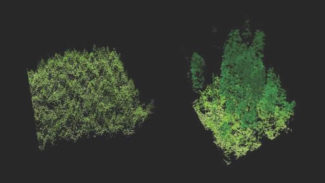 forest_lidar